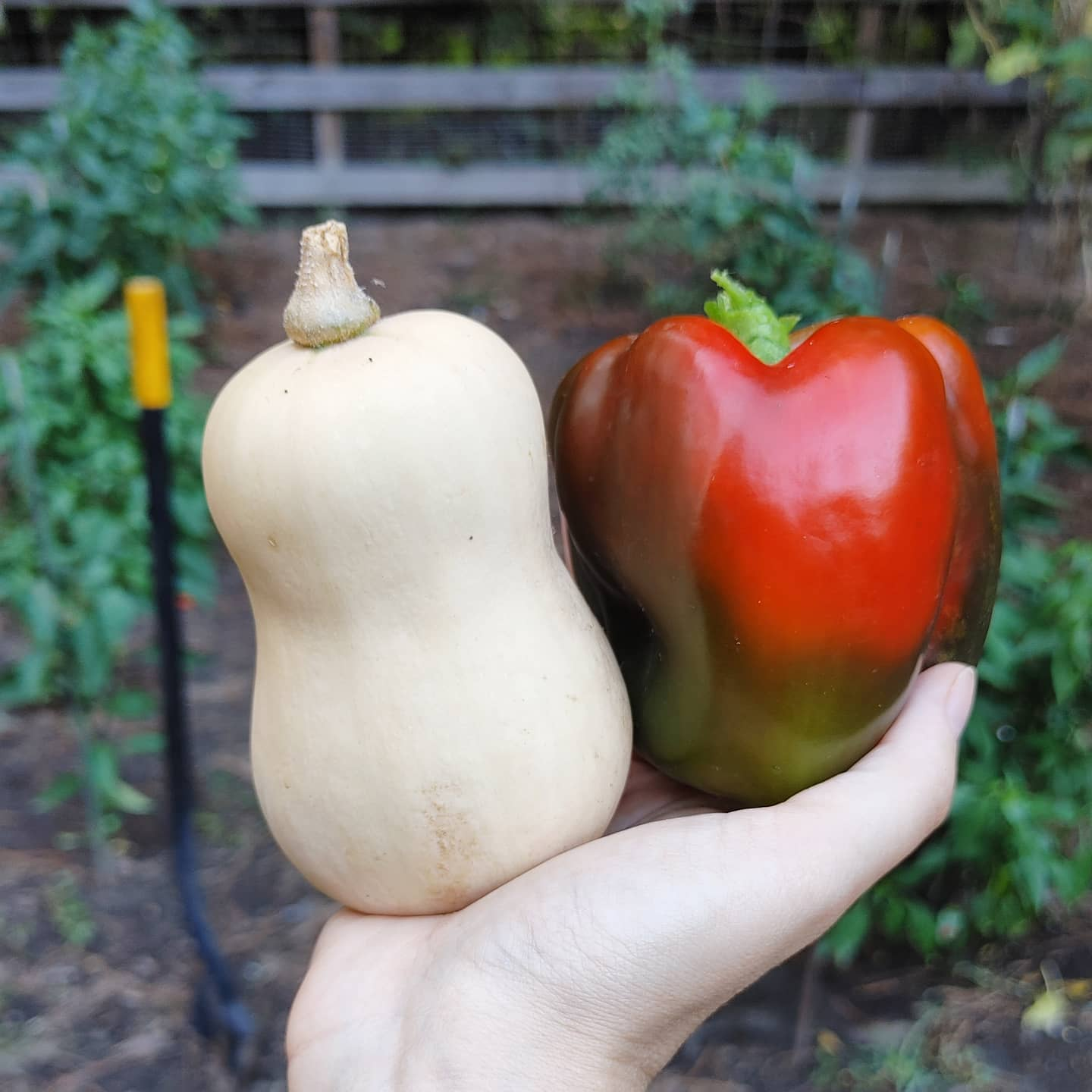 One is big and one is tiny. One volunteered and one was cultivated. I love them equally. We are all doing our best.